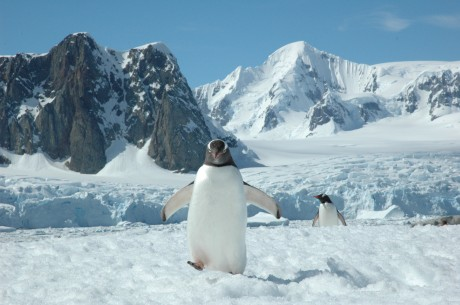 See the wild of Antarctica on a cruise