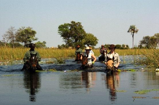 Aardvark Safaris, Okavango Delta riding, African Horseback Safaris
