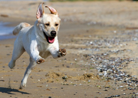 a dog running on a beach