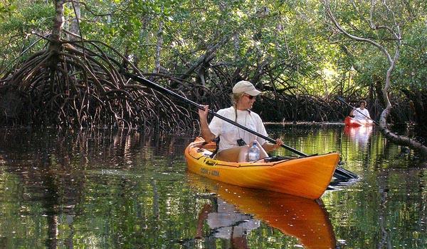 Canoeing amongst the mangroves