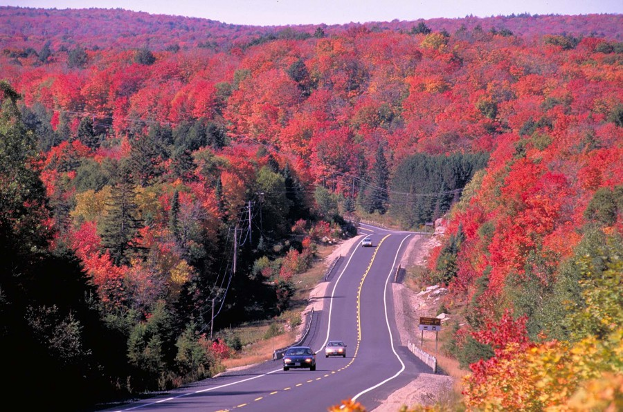 Image result for fall colours in ontario