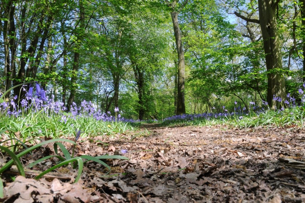Footpath through woods in spring